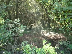 bosco anagni