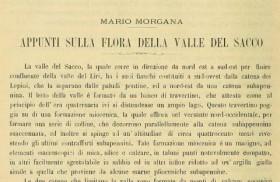 flora_valledelsacco_morgana